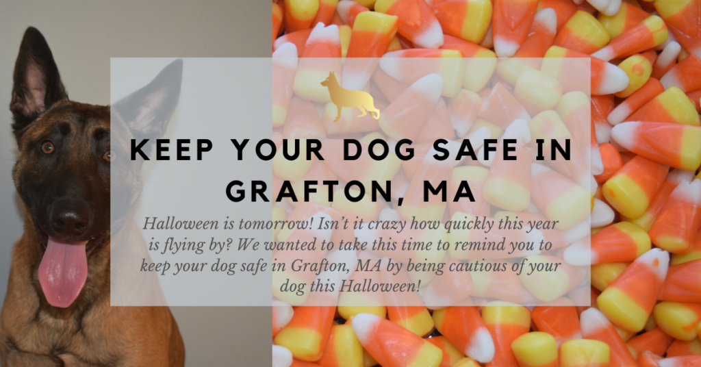keep your dog safe in grafton ma