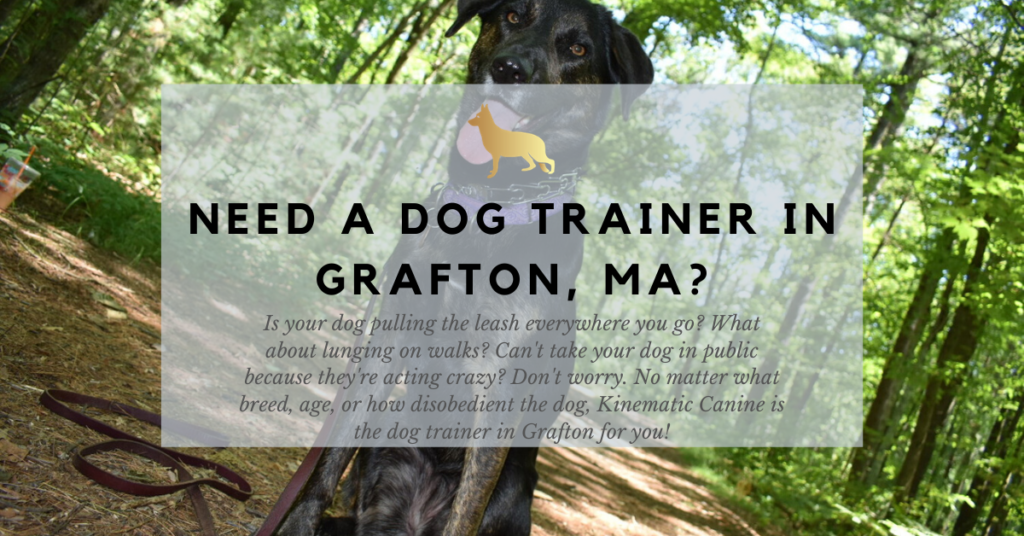 need a dog trainer in grafton ma