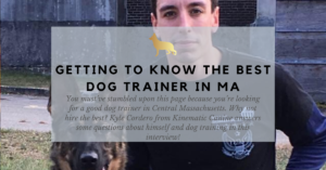 the best dog trainer in grafton ma