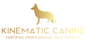 Kinematic Canine certified professional dog training