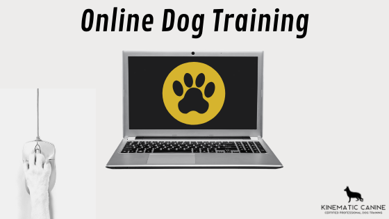 what is virtual dog training
