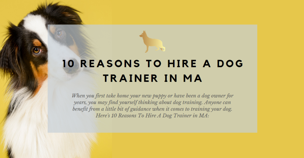 10 reasons to hire a dog trainer in ma