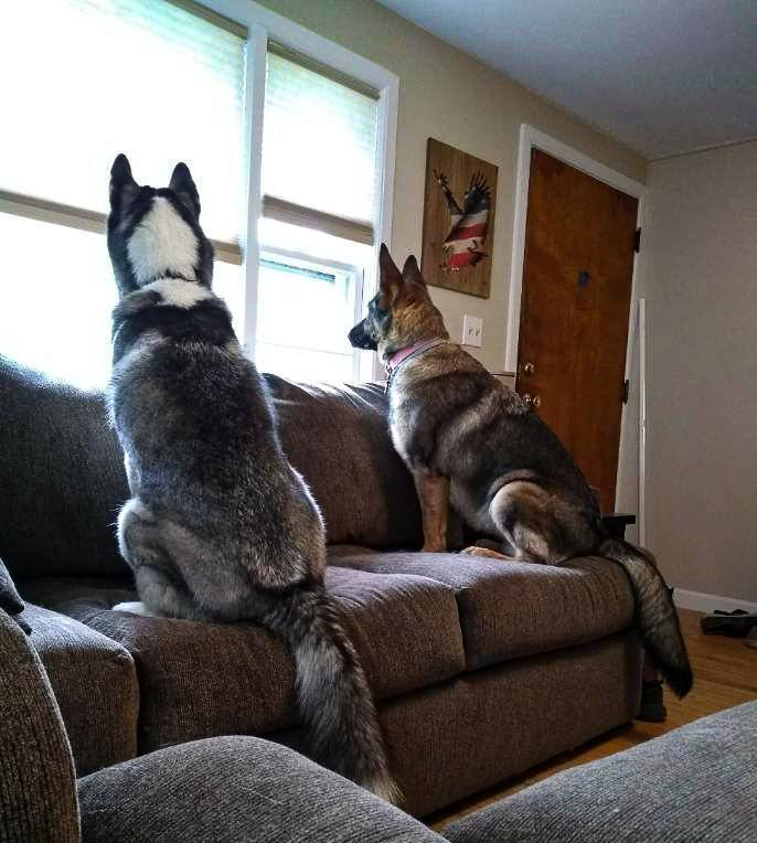separation anxiety dog trainer in ma