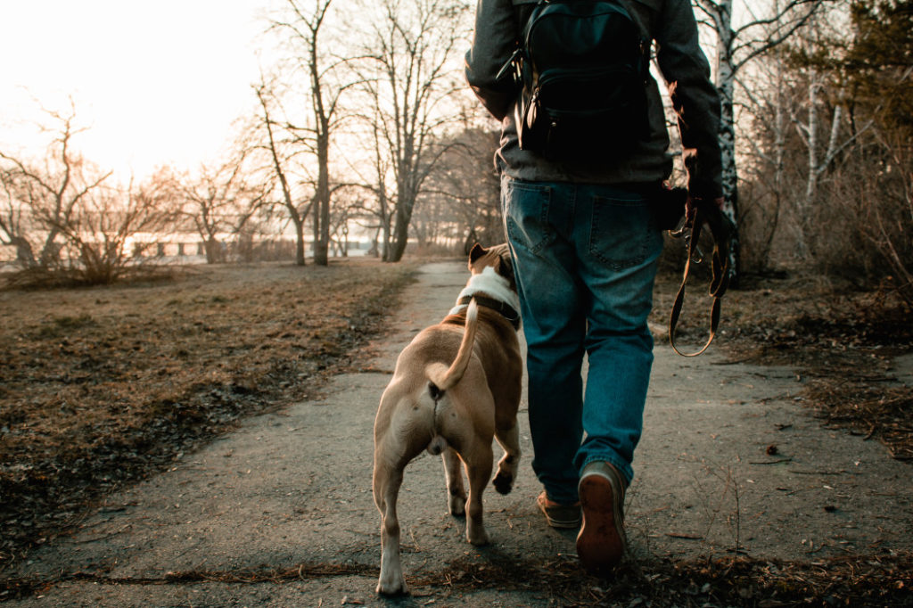 dog-walker-southern-new-hampshire